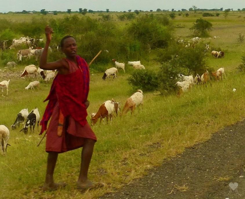 Maasai Boy Herding Goats